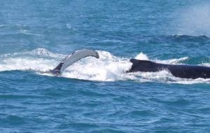 Whale Watching Augusta July 24 2018