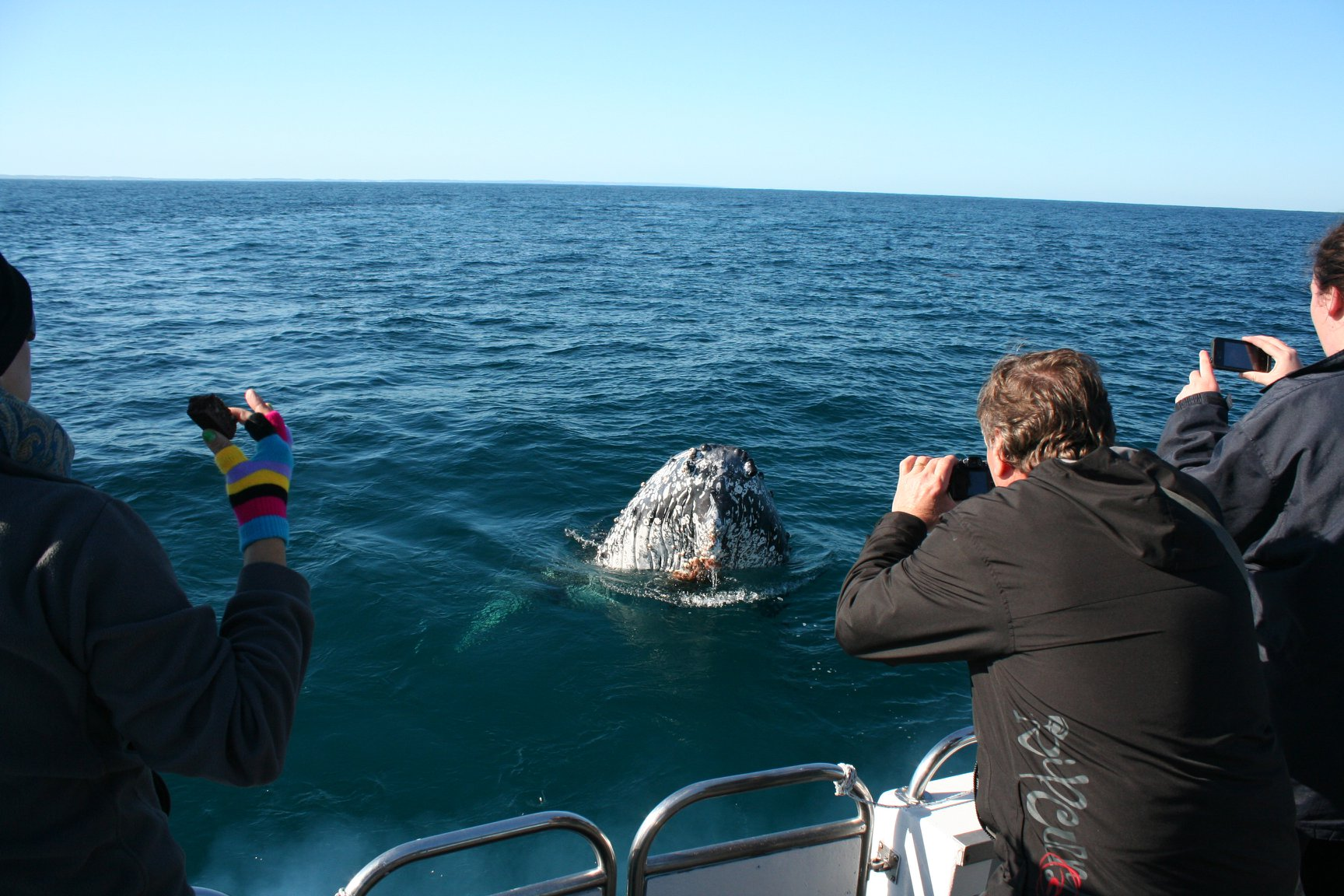 Incredible Close Whale Encounter